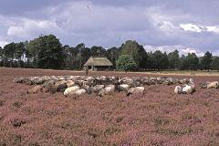 Schafstall im Höpen